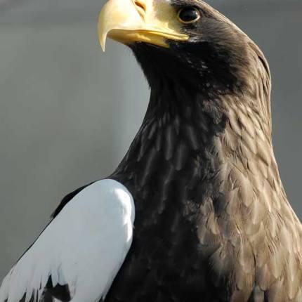 National Aviary (Joshua Hudson)