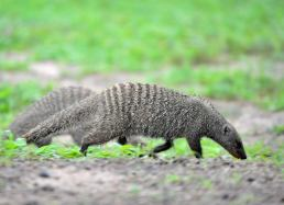 mongoose3
