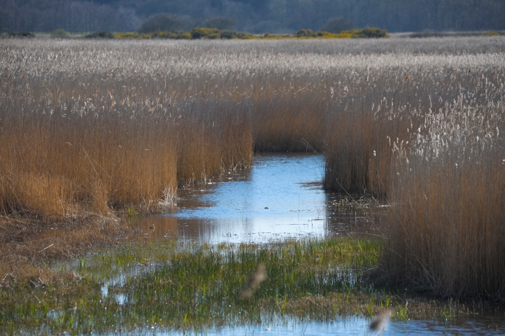 Minsmere (1 of 15)