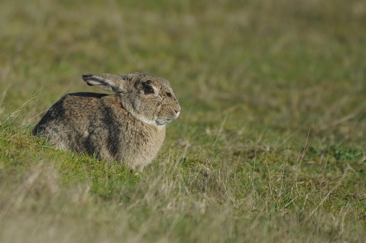 Minsmere (10 of 15)