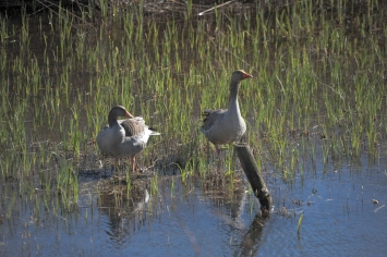Minsmere (2 of 15)