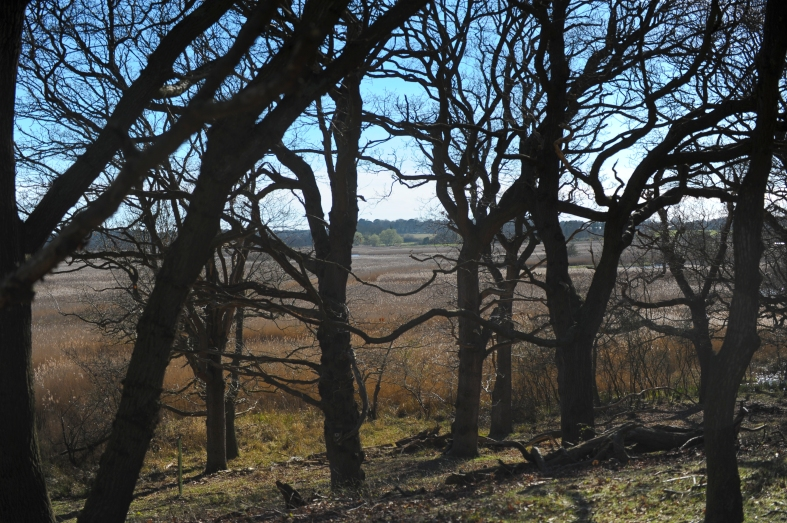 Minsmere (4 of 15)
