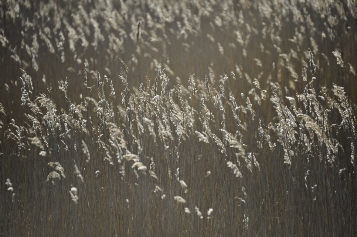 Minsmere (8 of 15)