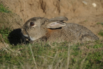 Minsmere (9 of 15)
